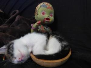 zombie&P