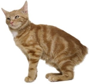 Manx Cats – Jeanne F...