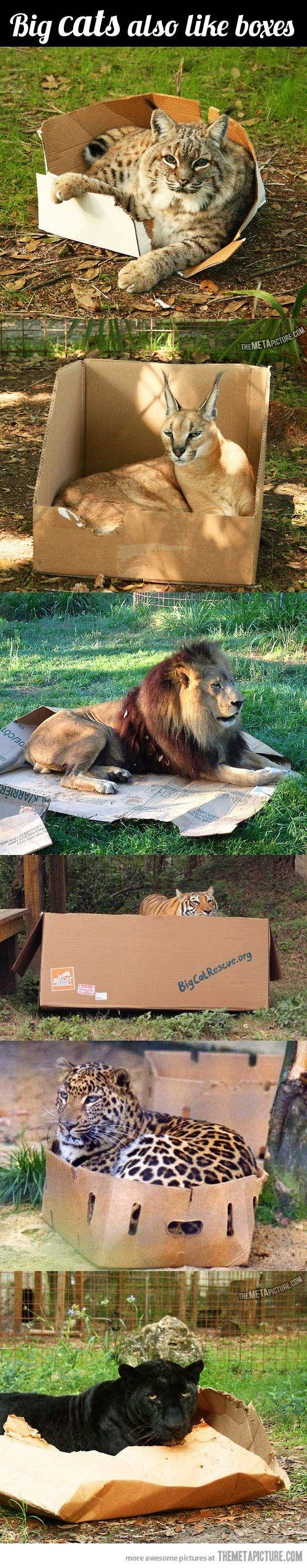 boxedcats2