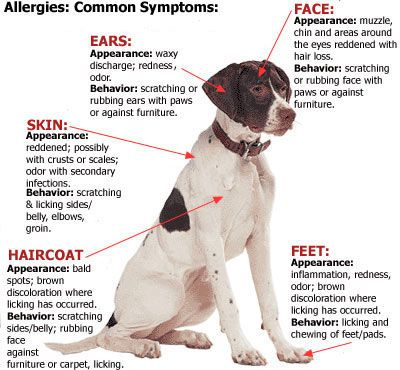Image result for pictures of dog skin conditions