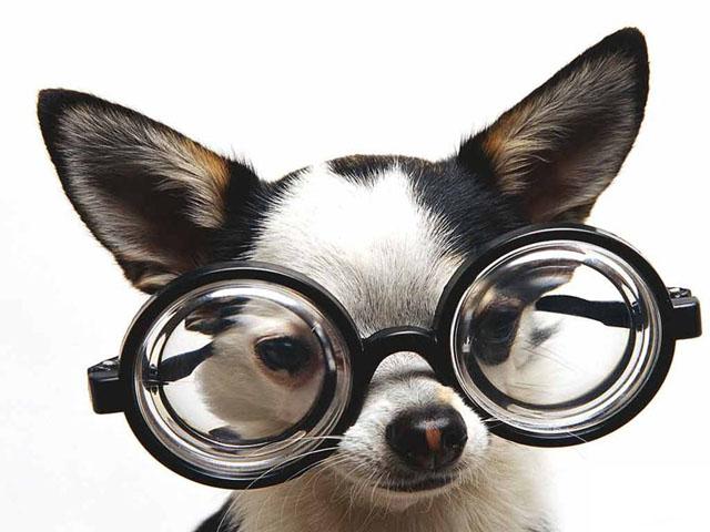 humorous-pets-screensaver.gif
