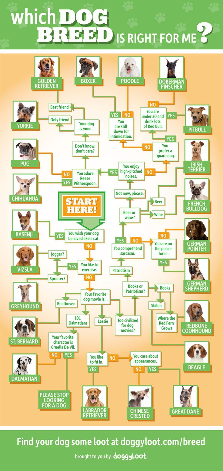 Which dog breed is the right choice jeanne foguth 39 s blog for What will my future family be like quiz