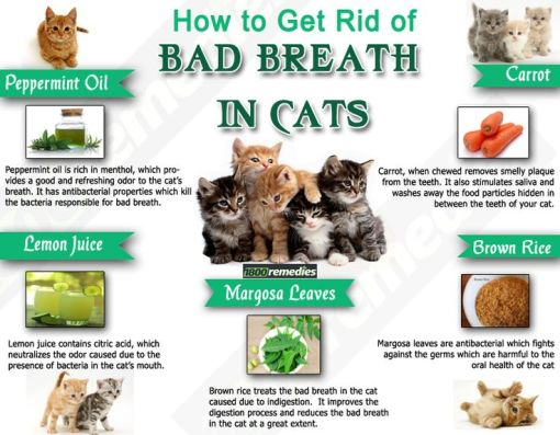 Best Dog Foods For Bad Breath