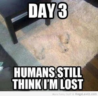 funny-dog-blends-into-carpet-pictures-lol.jpg