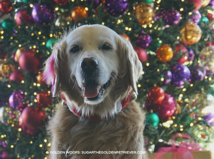PetSmart-Grooming-PetExpression-Holiday.jpg