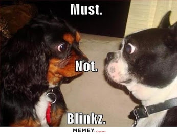 funny-dogs-staring