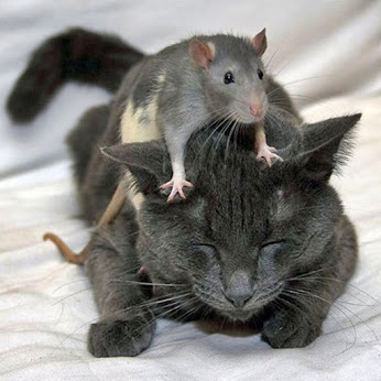 Cat and mouse.jpg