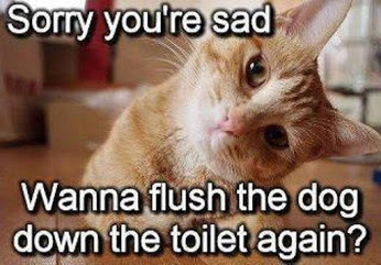 Funny-cat-Sorry-youre-sad.jpg