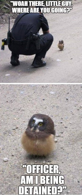 Wise owl asks the right question.jpg