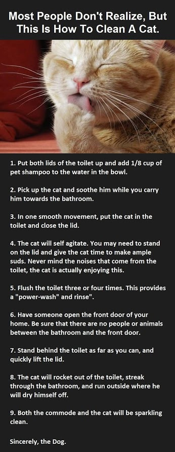 How To Clean Your Cat.jpg