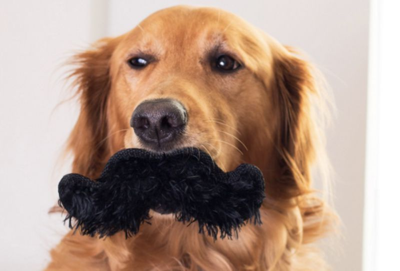Top-10-Dashing-and-Debonair-Dogs-With-Mustaches-3.jpg