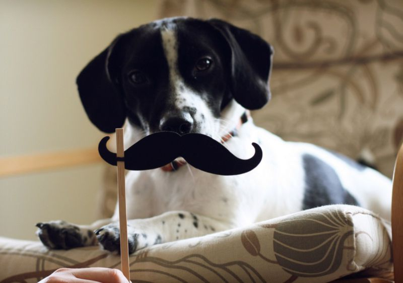 Top-10-Dashing-and-Debonair-Dogs-With-Mustaches-4.jpg