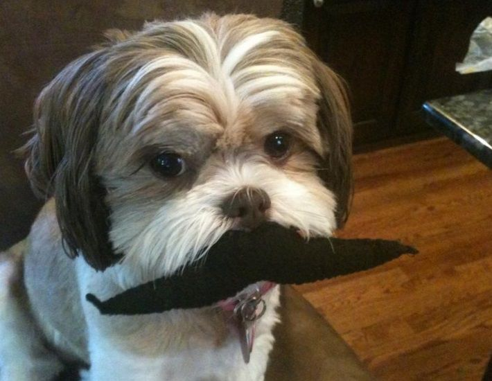Top-10-Dashing-and-Debonair-Dogs-With-Mustaches-6.jpg