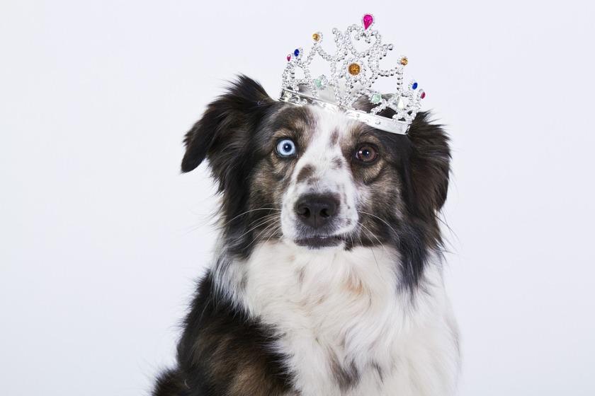 dog-1273056_960_720