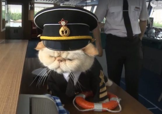 russian-sailor-cat-700x496