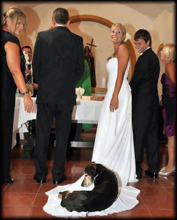 Wedding Photobomb. He's old, he can lay anywhere he wants.