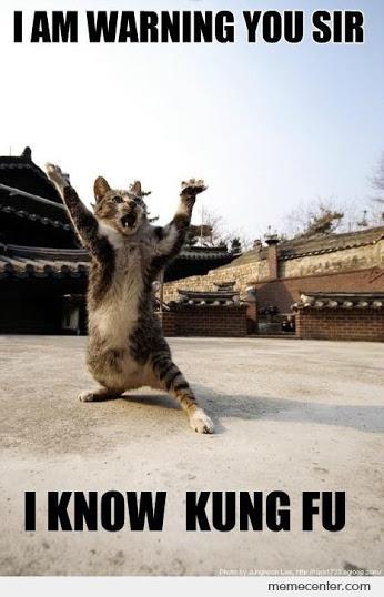Kung-Fu-Cat_o_92158