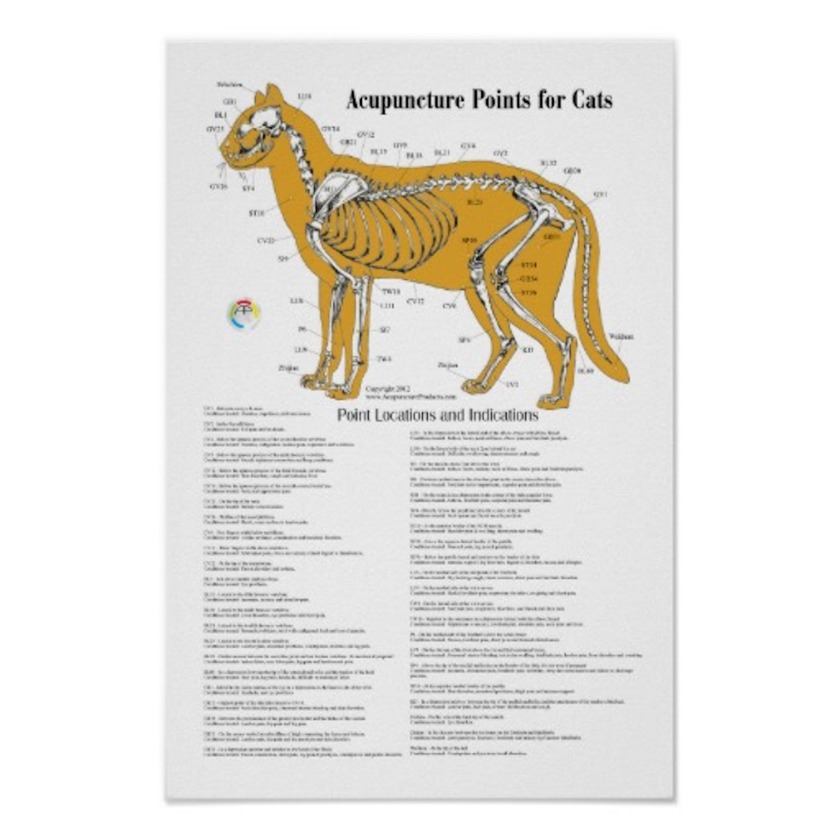 cat_acupressure_acupuncture_points_chart_print-r73b3852c1c8a40c2a9bc447e36bd8497_w8t_8byvr_512