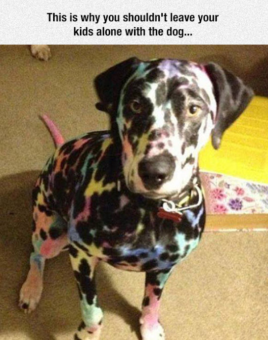 dog-looks-awesome-though