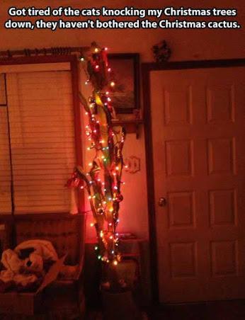 The Christmas Cactus.jpg