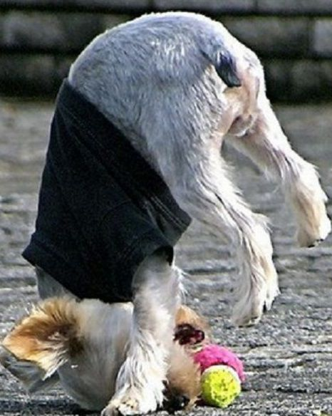 Top-10-Fail-Dogs-Who-Suck-At-Playing-Fetch-4.jpg