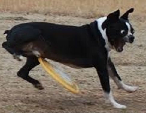 Top-10-Fail-Dogs-Who-Suck-At-Playing-Fetch-7.jpg