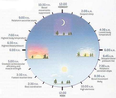 circadian-rhythym.jpg