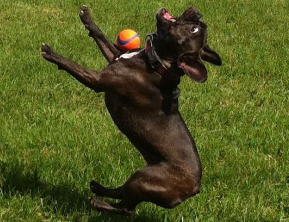 Top-10-Fail-Dogs-Who-Suck-At-Playing-Fetch-5.jpg