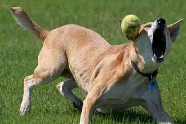 Top-10-Fail-Dogs-Who-Suck-At-Playing-Fetch.jpg
