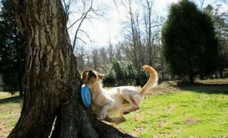 Top-10-Fail-Dogs-Who-Suck-At-Playing-Fetch-9.jpg