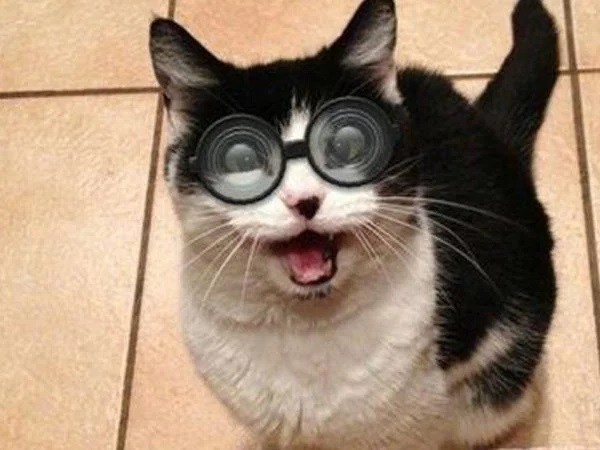 Ten-Cats-Wearing-Crazy-Glasses-Just-to-Make-You-Laugh-1.jpg