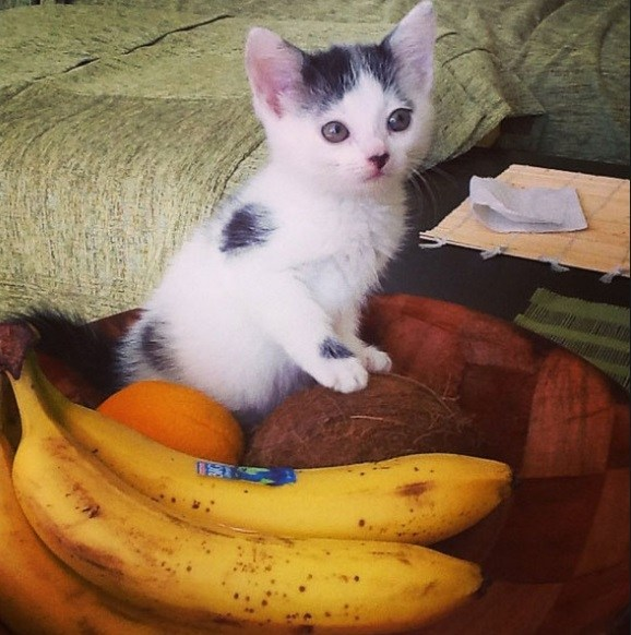 Ten-Cats-Who-Dont-Care-About-Your-Fruit-Bowl-3