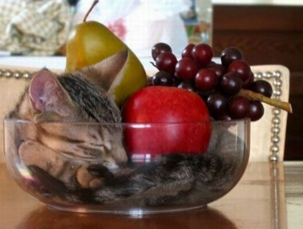 Ten-Cats-Who-Dont-Care-About-Your-Fruit-Bowl-8