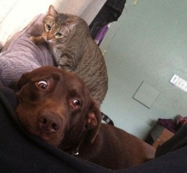Ten-Cats-Who-Hate-Dogs-and-Are-Not-Afraid-to-Show-It-1