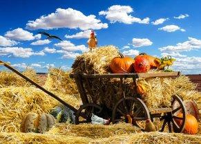 thanksgiving-1674774__340