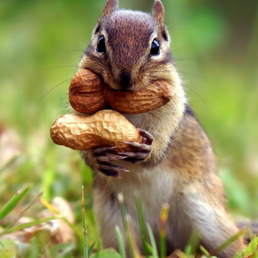 FrihaKhn01_Squirrel_YkVqQGNecg