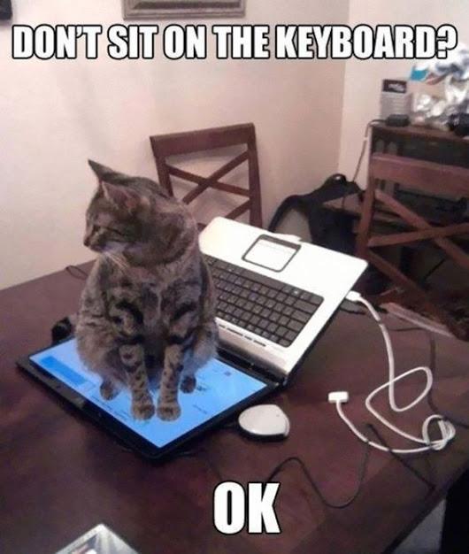 cat, computer