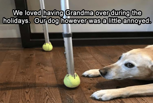 the-dog-was-a-little-annoyed-at-grandma-when-she-visited-for-thanksgiving